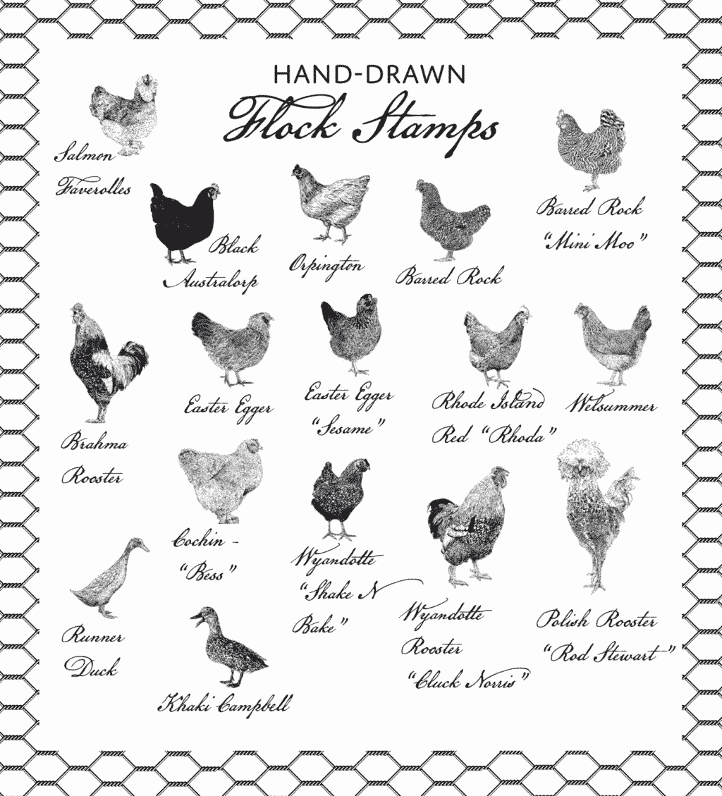 Hand drawn Flock Stamps - Chickens and Ducks