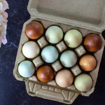 Full Dozen Vintage Style Egg Cartons